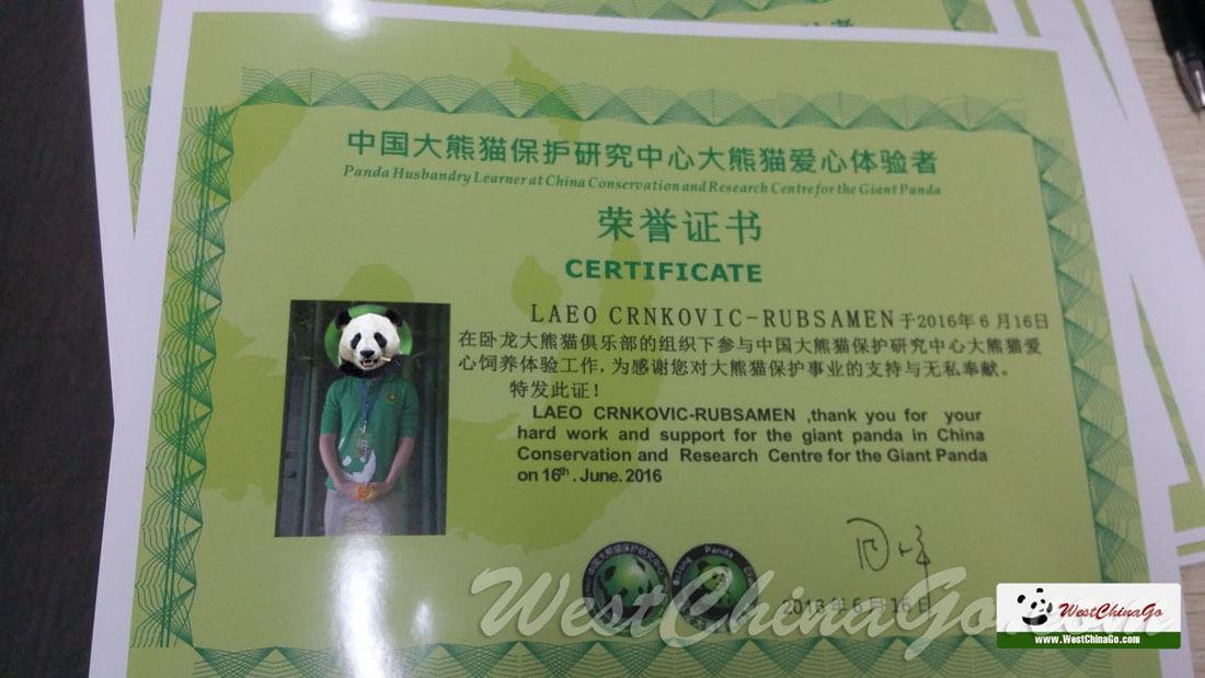 dujiangyan panda volunteer certificate