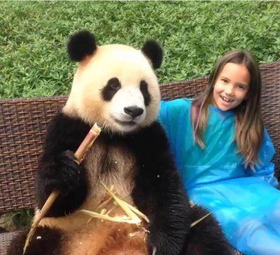 2017 China Chengdu photo with panda