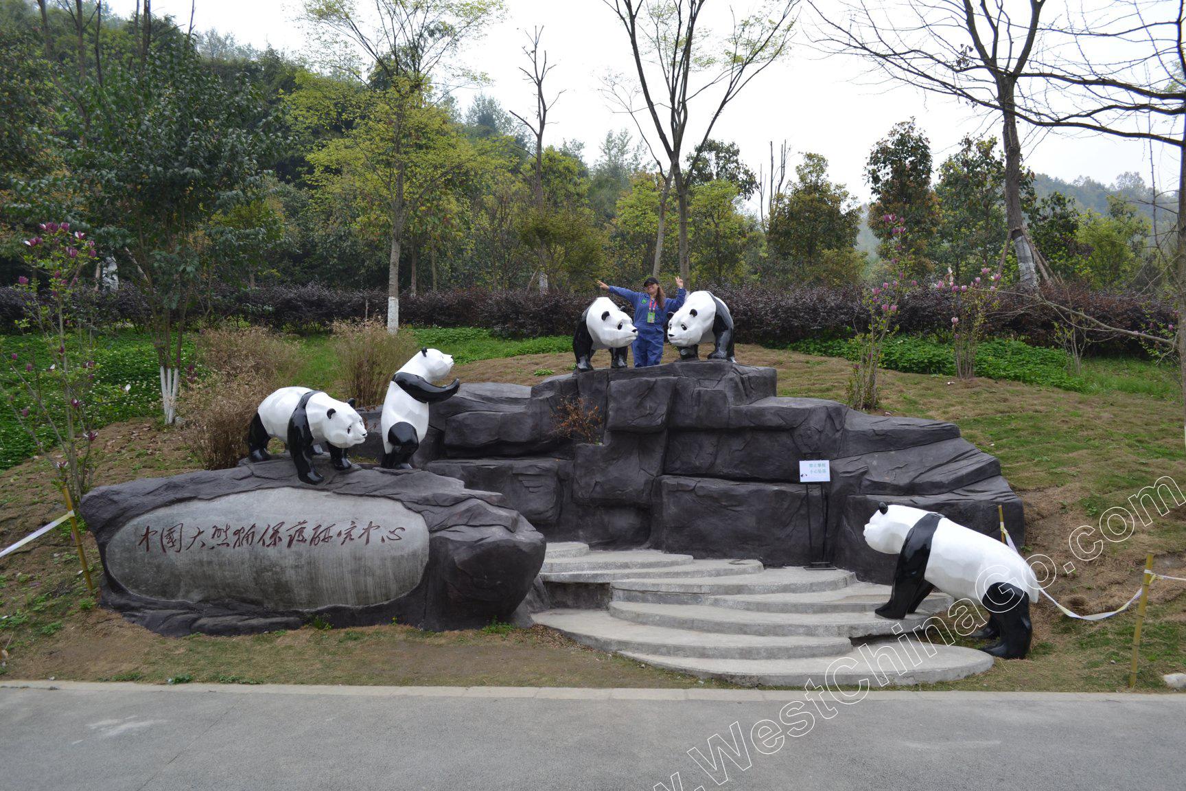 China Panda Volunteer