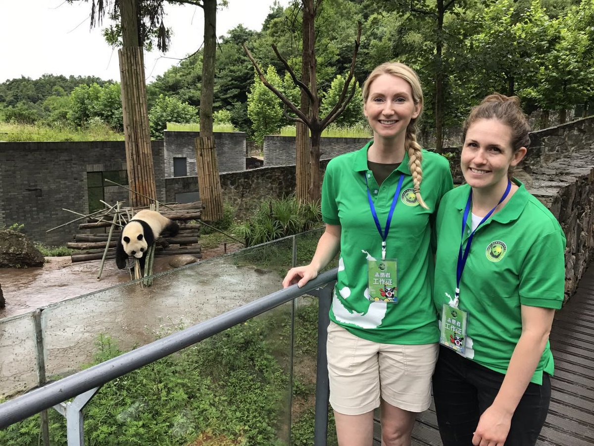 Chengdu panda volunteer