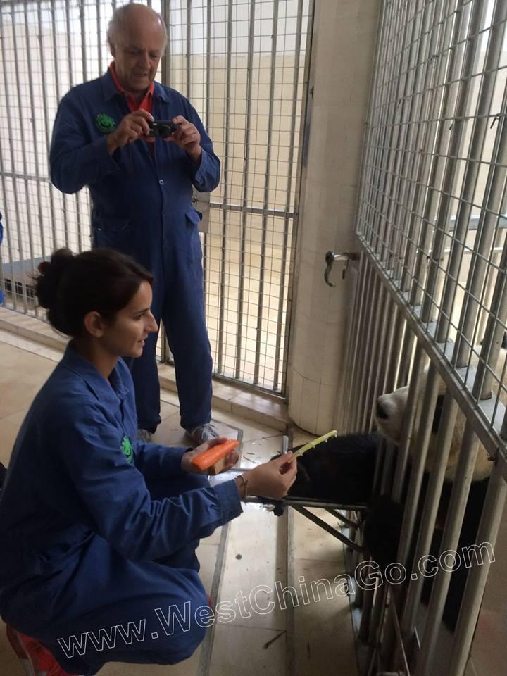 dujiangyan panda volunteer