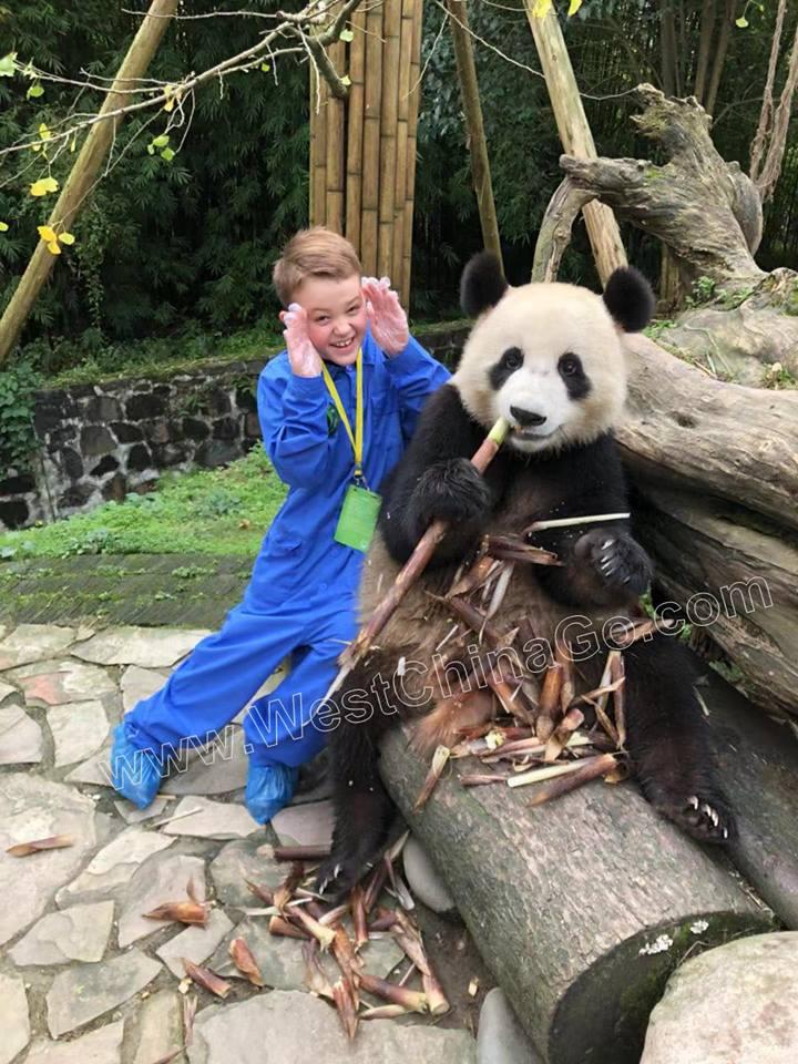 chengdu panda hug