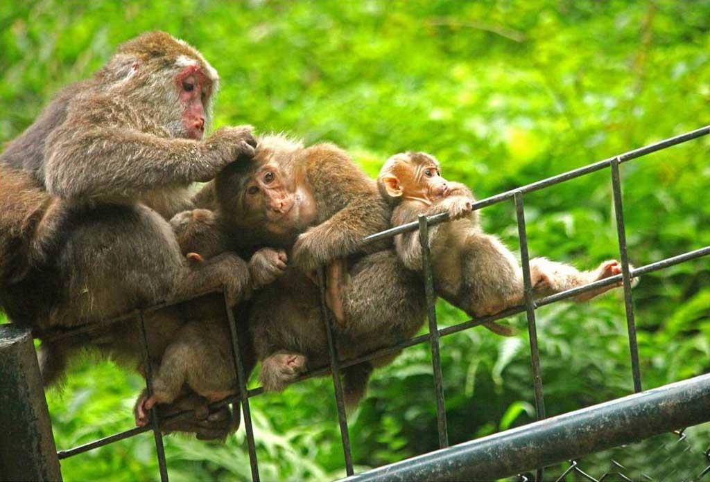 mount emei_monkey zone