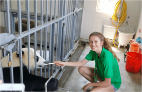chengdu panda volunteer