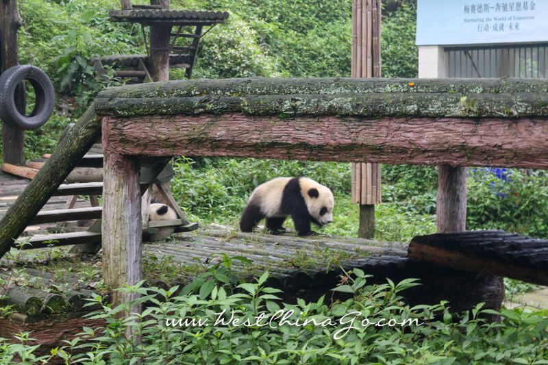 YaAn BiFengXia Panda Research Center