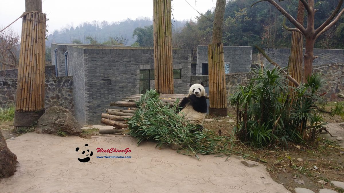 1 Day Panda Keeper Program in Chengdu
