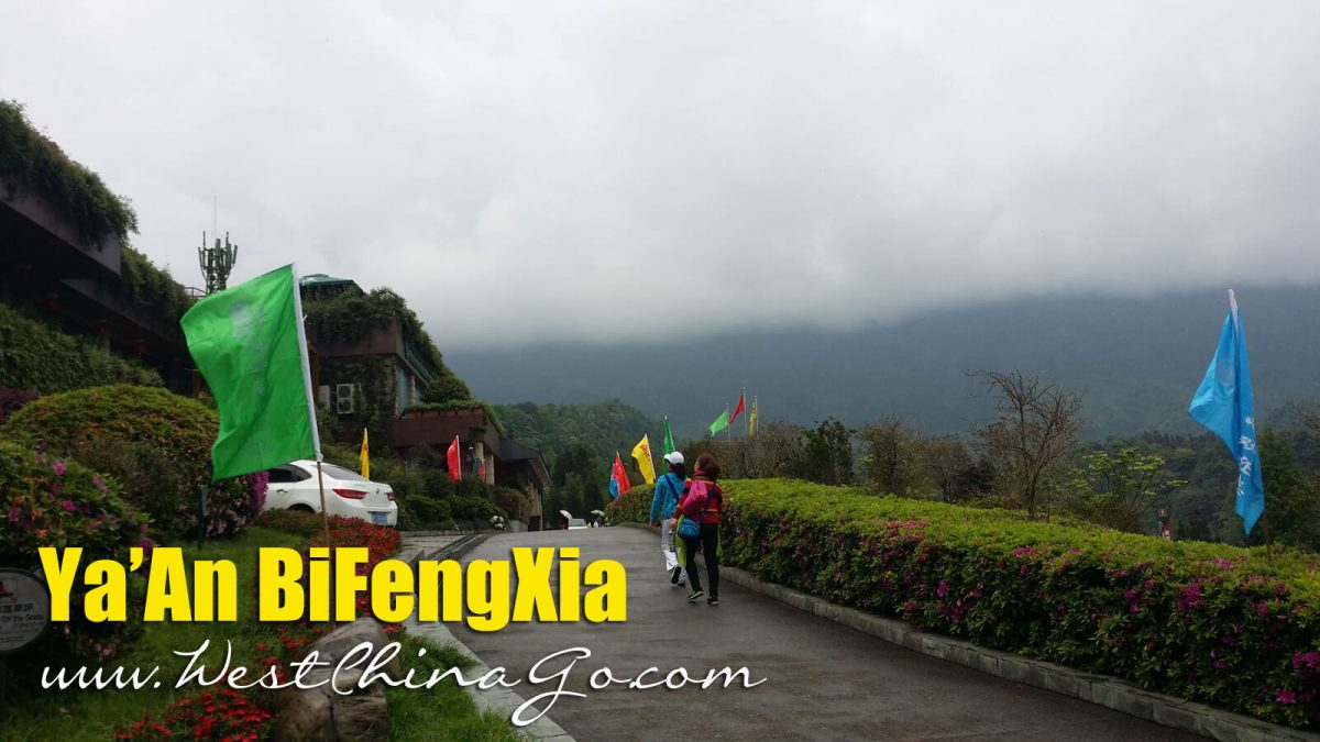 2 Days Ya'An Bifengxia Wild Life Park+ Panda Base Tour