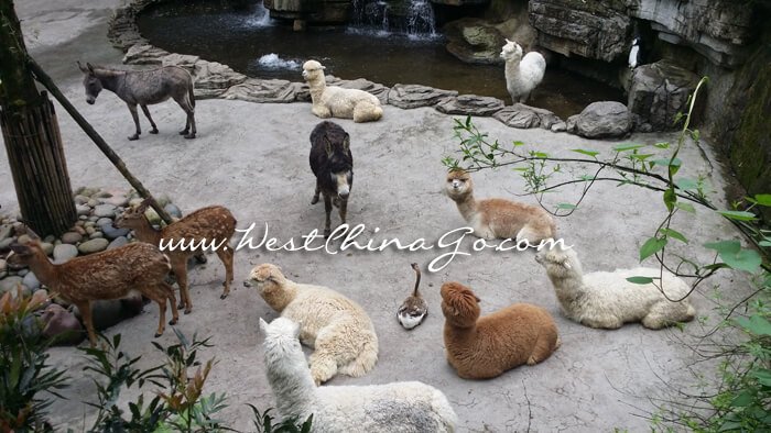 YaAn BiFengXia Panda Research Center+Wild Life Park