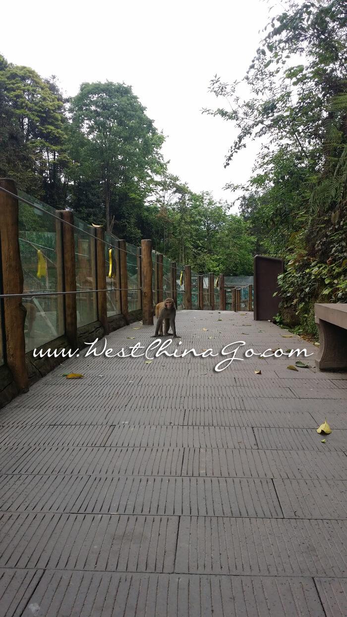 YaAn BiFengXia Panda Research Center+Wild Life Park