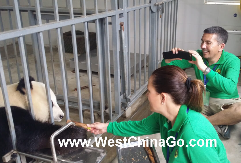 2016 ChengDu Panda Volunteer