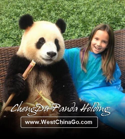 chengdu panda holding,hug