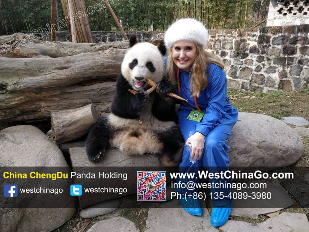 2018 China Chengdu panda holding