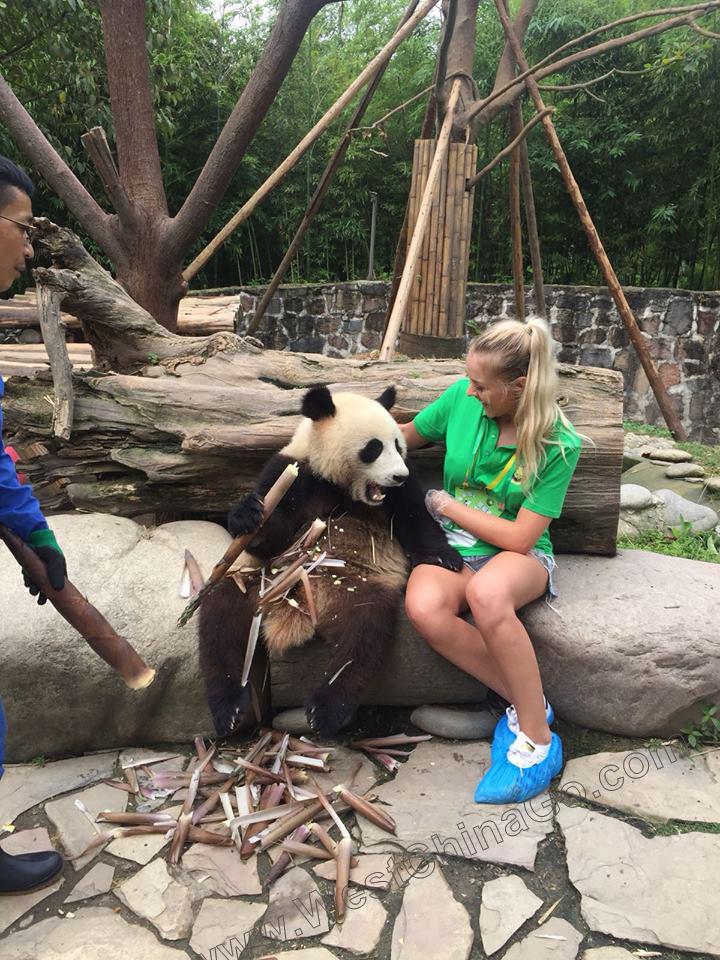 China ChengDu Panda Hug