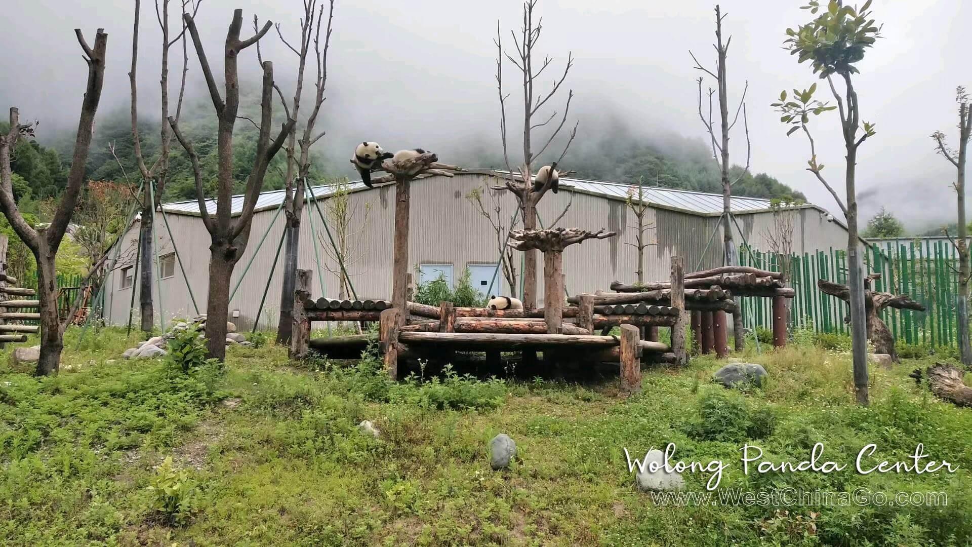 wolong-panda-reserve